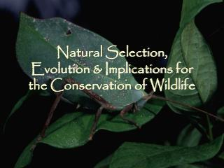Natural Selection,  Evolution & Implications for  the Conservation of Wildlife