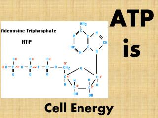 ATP is