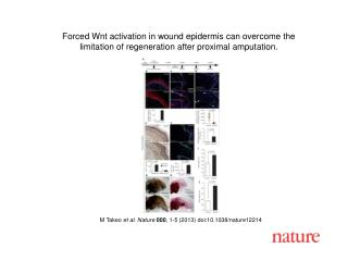M Takeo  et al. Nature 000 , 1-5 (2013)  doi:10.1038/nature12214