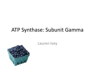 ATP Synthase: Subunit Gamma