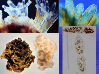 Tropical Reefs: Coral/Algal