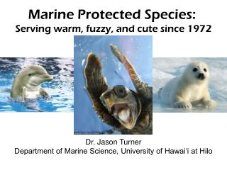 Marine Protected Species: Serving warm, fuzzy, and cute since 1972