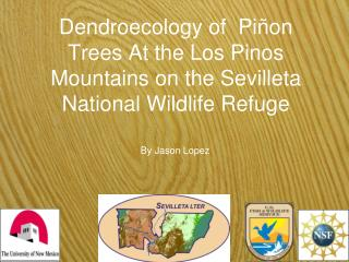 Dendroecology of  Piñon Trees At the Los Pinos Mountains on the Sevilleta National Wildlife Refuge
