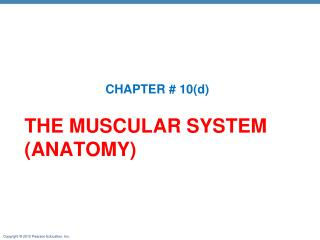 THE MUSCULAR SYSTEM (ANATOMY)