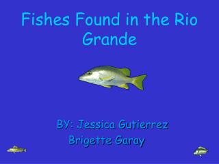 Fishes Found in the Rio Grande
