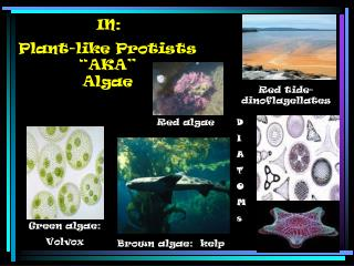 "Plant-like Protists ""AKA"" Algae"