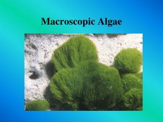 Macroscopic Algae