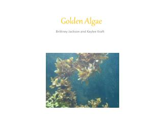 Golden Algae