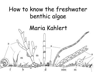 How to know the freshwater benthic algae