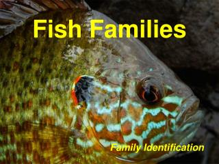 Fish Families