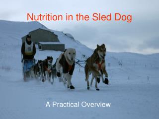 Nutrition in the Sled Dog