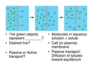 The green objects represent ________? Dashed line? Passive or Active transport?