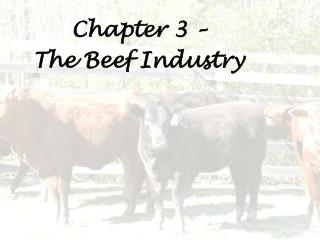 Chapter 3 –  The Beef Industry