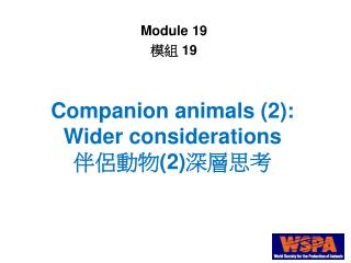 Companion animals (2): Wider considerations 伴侶動物(2)深層思考
