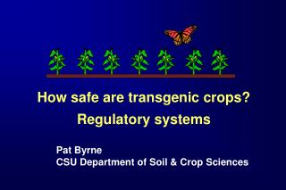 How safe are transgenic crops? Regulatory systems