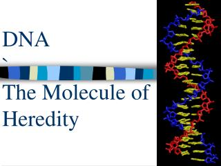 DNA ` The Molecule of Heredity