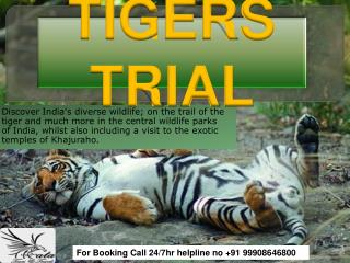 India Tigers Trail