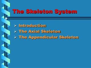 The Skeleton System
