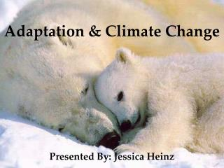 Adaptation & Climate Change