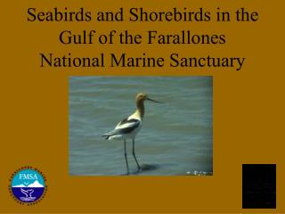 Seabirds and Shorebirds in the  Gulf of the Farallones  National Marine Sanctuary
