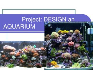 Project: DESIGN an AQUARIUM