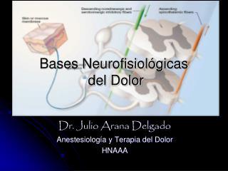 Bases Neurofisiológicas   del Dolor