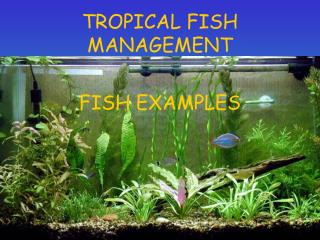 TROPICAL FISH MANAGEMENT