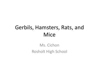 Gerbils, Hamsters, Rats, and Mice