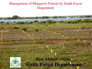 Management of Mangrove Forests by Sindh Forest Department