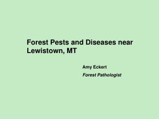 Forest Pests and Diseases near Lewistown, MT