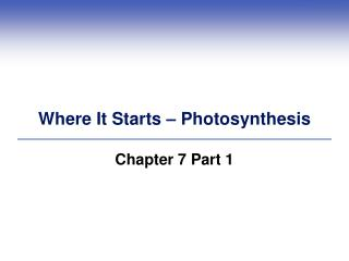 Where It Starts – Photosynthesis