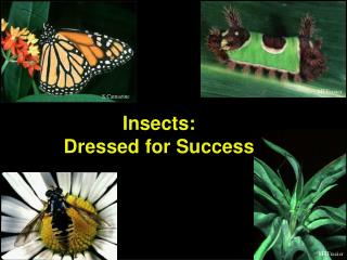 Insects: Dressed for Success