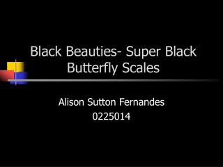 Black Beauties- Super Black Butterfly Scales