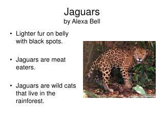 Jaguars by Alexa Bell