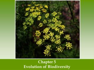 Chapter 5 Evolution of Biodiversity