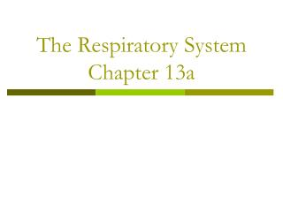 The Respiratory System Chapter 13a