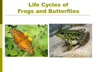 Life Cycles of Frogs and Butterflies
