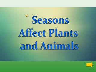 Seasons Affect Plants  and Animals