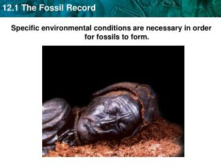 Specific environmental conditions are necessary in order for fossils to form.