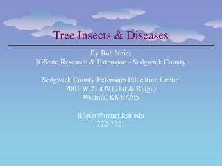 Tree Insects & Diseases