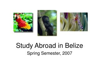 Study Abroad in Belize Spring Semester, 2007