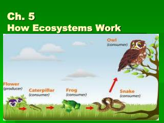 Ch. 5  How Ecosystems Work