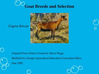 Goat Breeds and Selection