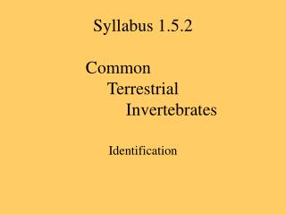 Syllabus 1.5.2  	Common			  Terrestrial  		Invertebrates