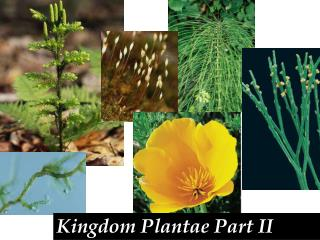 Kingdom Plantae Part II