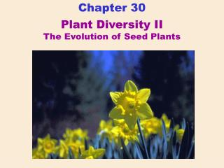 Plant Diversity II The Evolution of Seed Plants
