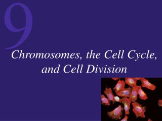 Chromosomes, the Cell Cycle, and Cell Division