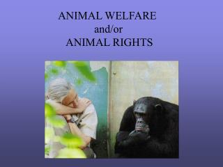 ANIMAL WELFARE  	     and/or    ANIMAL RIGHTS
