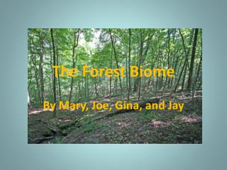 The Forest Biome