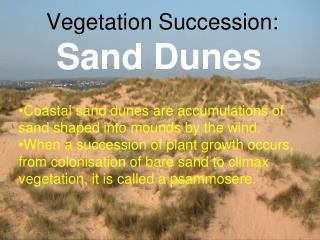 Vegetation Succession: Sand Dunes
